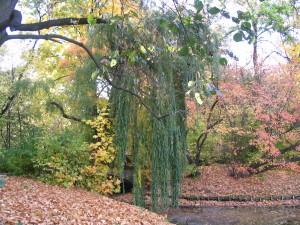 park skaryszewski 113