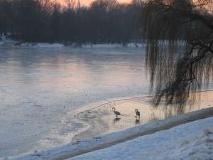 zima nad jeziorkiem 022